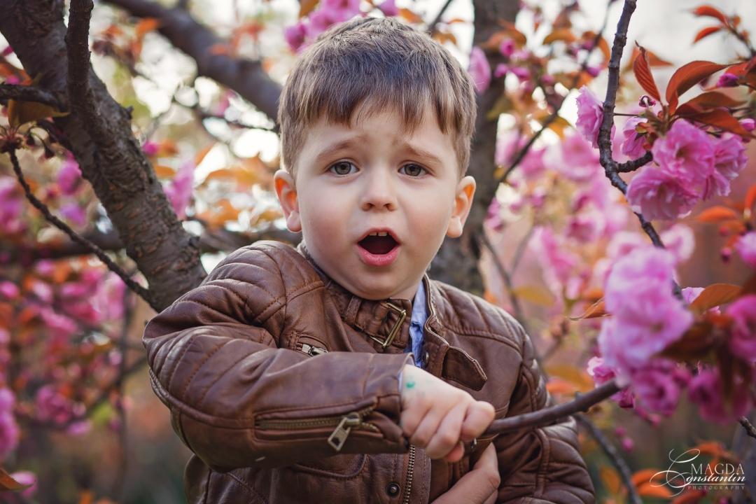 baietel urcat in cires inflorit, rozz, primavara, in herastrau, gradina japoneza